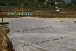 floating row cover installed for plants protection